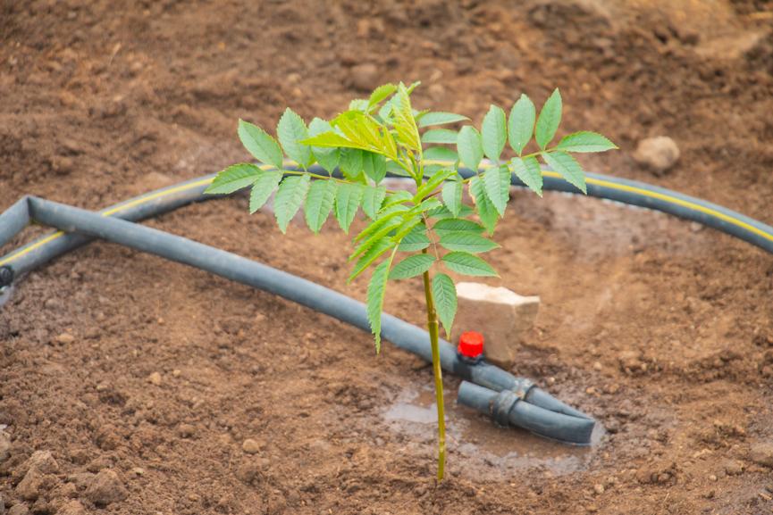 plantación-4